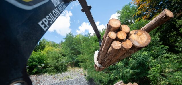 China buys bark beetle-infested spruce from Germany, spurning Canada