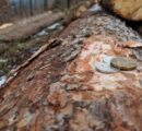 Czech forest owners to receive state compensation for damaged wood