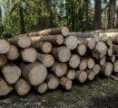 Södra to increase price for spruce timber as demand from the sawmill industry is high
