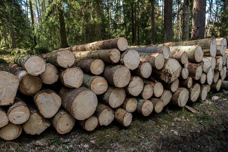 Södra Wood