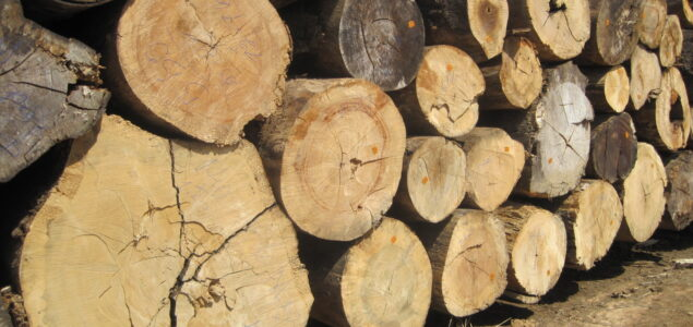 Latest prices for Brazilian exports of tropical logs, sawnwood and plywood