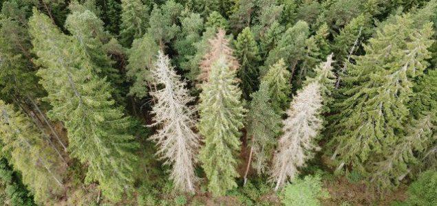 Södra sees a 25% increase in spruce bark beetle damage