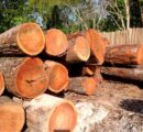 Expanding opportunities for lesser used certified hardwoods in Europe