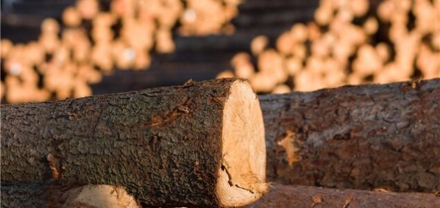 Sweden: Softwood sawlog prices on the rise as demand from sawmills booms