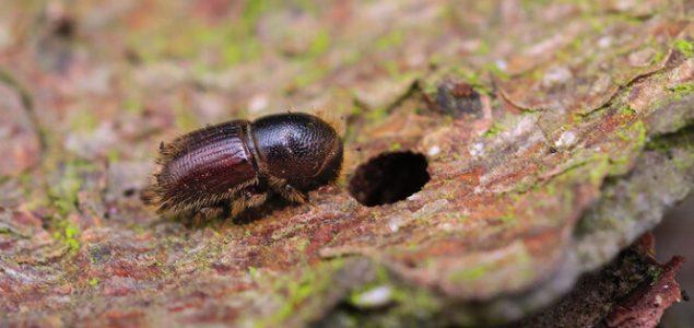 Czech Republic: Bark beetle damage reaches record 40 million m3