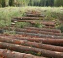 Austrian wood industry under the impact of corona crisis, calamities and record low prices