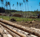 Logging in Germany reaches a new record in 2020 due to forest damage