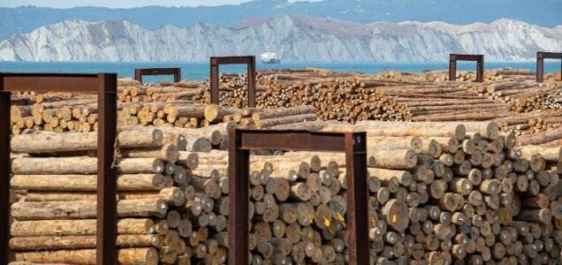 European countries are conquering China's softwood import market
