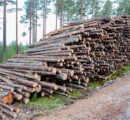 Raw material shortages could have serious consequences for Sweden's forest industry