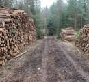 Czech Republic: Bark beetle crisis drags log prices down; heavy losses for forest owners