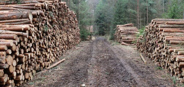 Czech Republic: Record logging due to bark beetles; state subsidies compensate low wood prices