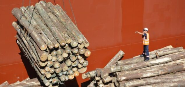 Uruguayan timber exports and prices hit record high due to strong Chinese demand
