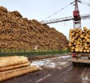 Russia: Who will win or lose from the roundwood export ban?