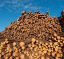 Canadian lumber producers to move more to US South due to high log prices in BC
