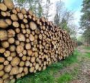 The situation on the German wood market is easing; prices expected to rise