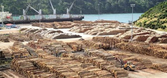 New Zealand log prices hit 23-year high