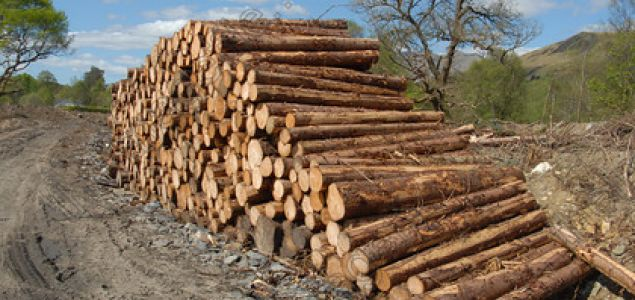 Dropping roundwood prices in Lithuania, but higher than a year ago