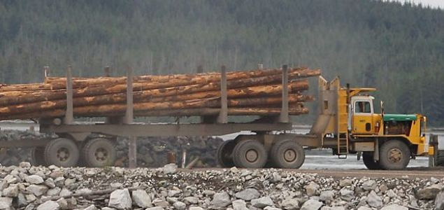 Log prices in New Zealand reach 24-year high