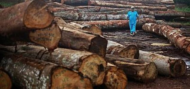 Mozambique to further extend restriction on logging and timber exports