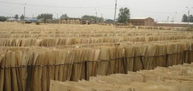 Steady growth in China's plywood exports and prices