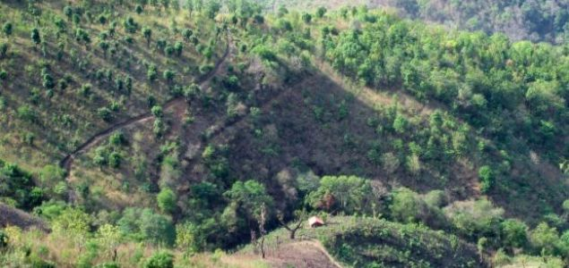 Myanmar pursues EU-led forest protection agreement