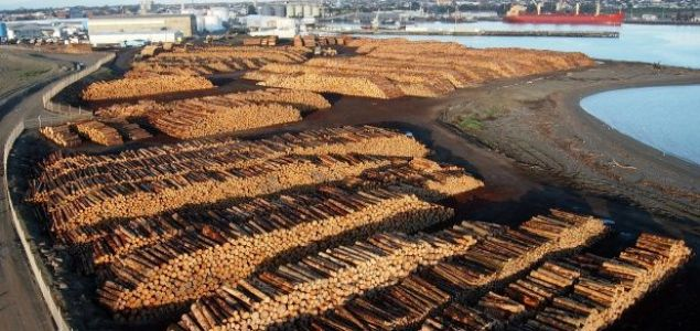 European softwood logs exports to China outpace those of softwood lumber