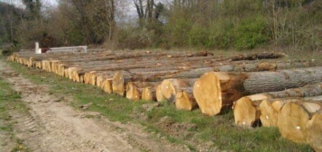 France: Prices for oak logs start to fall after years of sharp rise