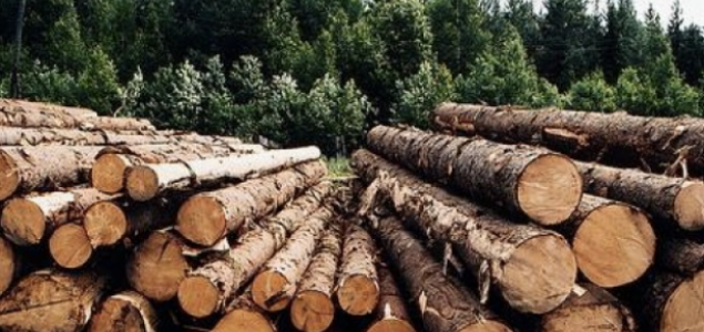 The Russian forestry sector reports growth in production in 2018
