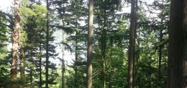 Forestry industry production in Ireland to double by 2035