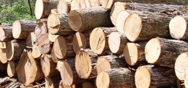 Ghana's government issues national ban on rosewood logging