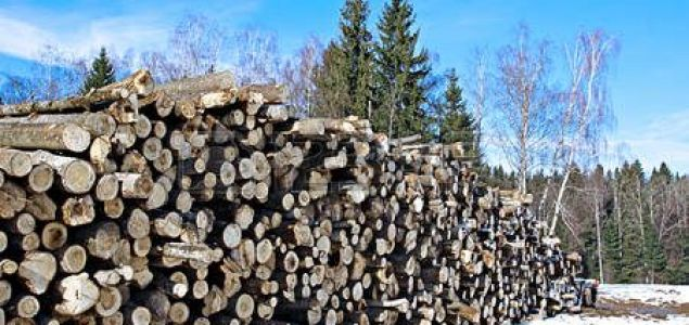 Log export tariffs in Russia's Far East could be reduced by 50%