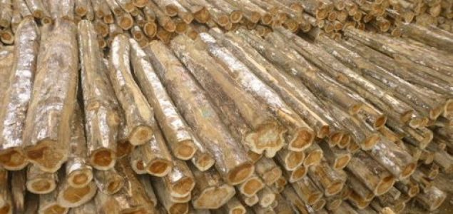 Myanmar to allow exports of raw timber produced in plantations
