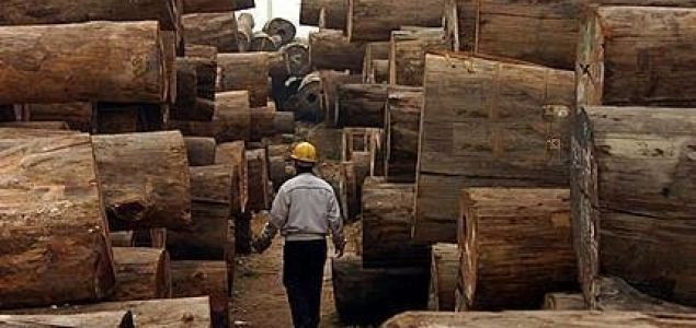 Unusually long period of price stability for African hardwoods