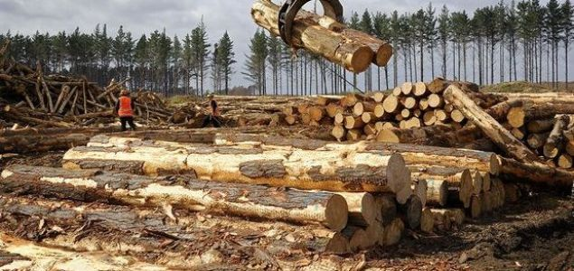 New Zealand's forest industry to resume operations next Monday