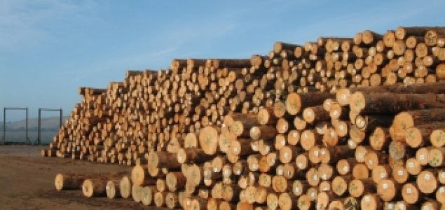 German softwood logs exports to China doubled in the first half