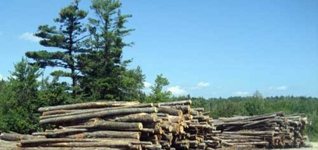 US timber harvests increased by 10% due to increased production