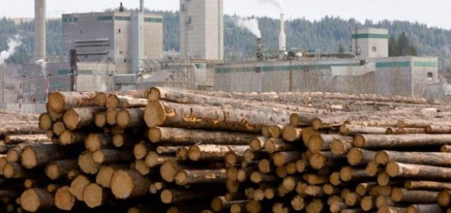 US lumber prices rise sharply amid sawmill curtailments in BC